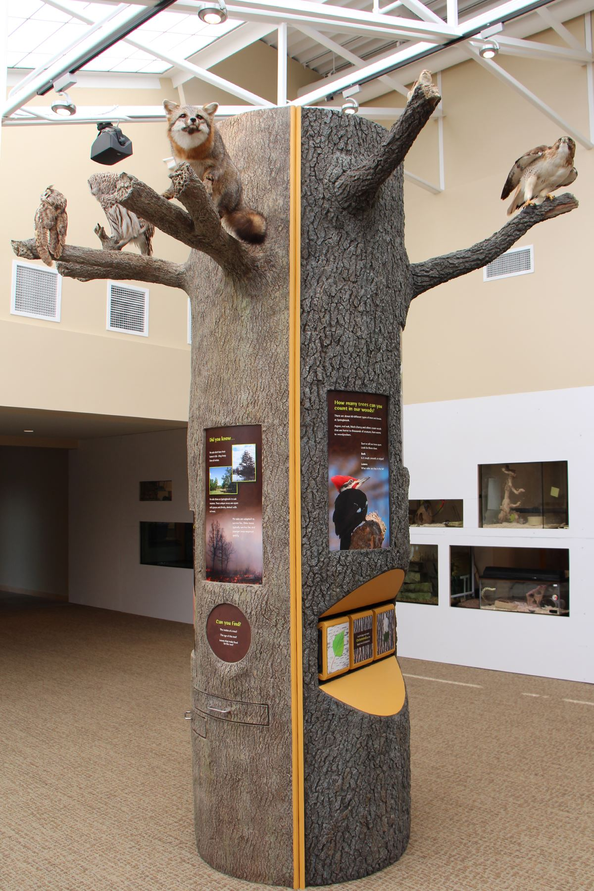 tree exhibit at Springbrook